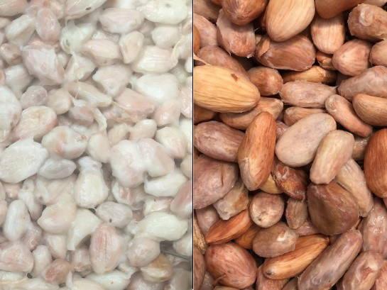 国産カカオの発酵の様子