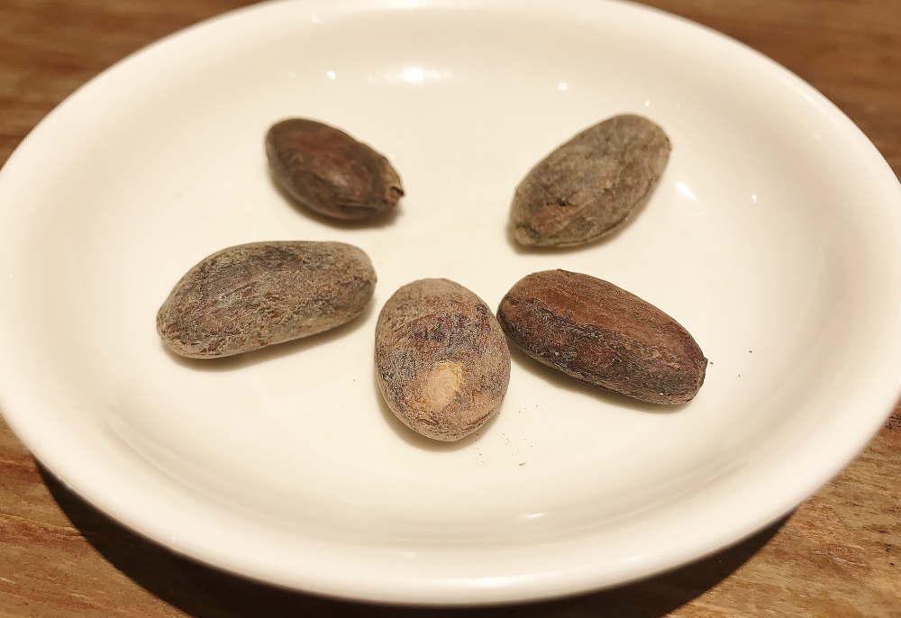 焙煎カカオ豆 カカオストア